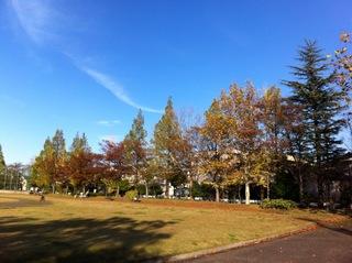 太郎丸公園の写真1.JPG